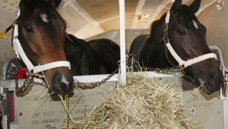 """Derby Horses Fly On """"Air Horse One"""" (Video)"""