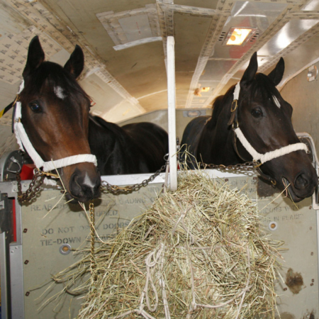 "Derby Horses Fly On ""Air Horse One"" (Video)"